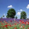 鲜花素材 风景摄影 摄影图片下载 蓝色天空 晴空意境写意