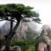黃山迎客松 迎客松攝影 攝影圖片下載 高清風景照片