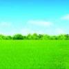 【psd】自然天空海报素材 绿树成群 蓝色天空 环保大自然