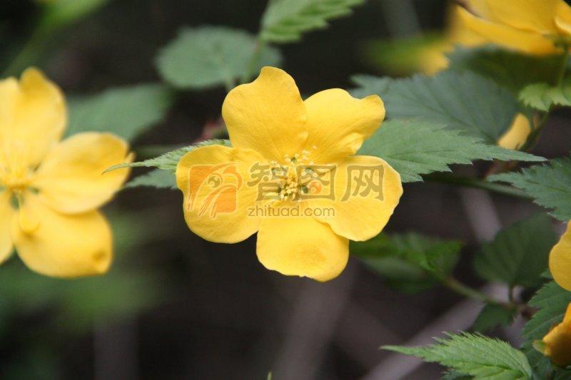 特写植物 鲜花特写 特写梅花