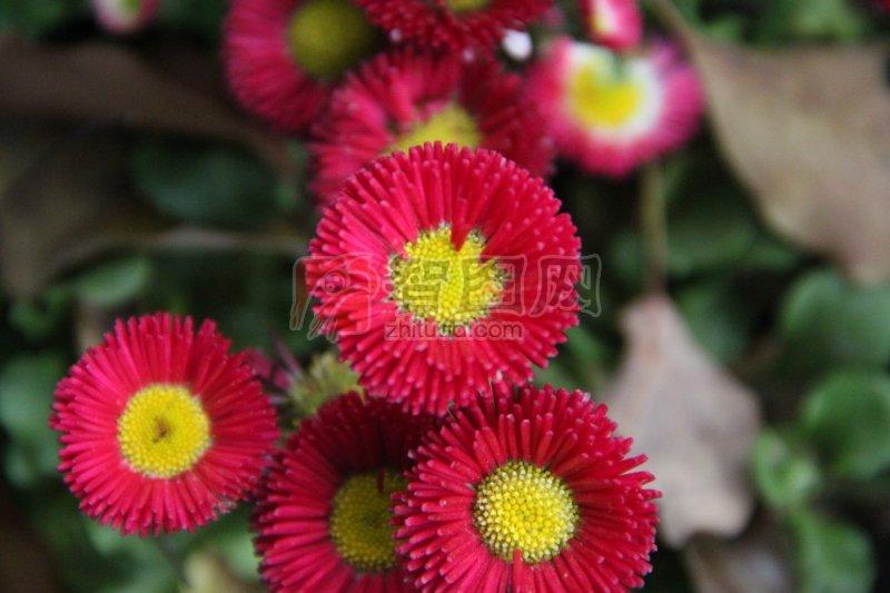 鲜花特写 特写植物