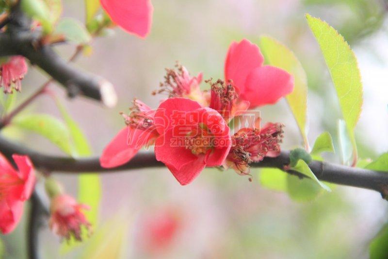 鮮花特寫 特寫植物