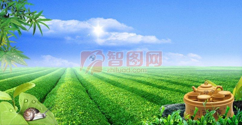 茶叶广告 茶类广告 茶香广告