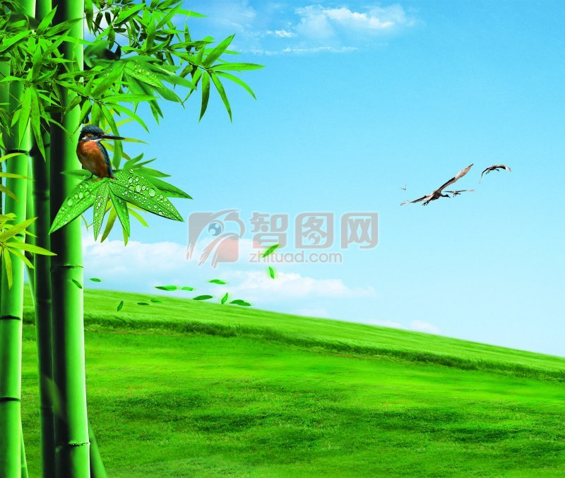 自然类海报