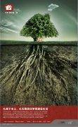树与根海报