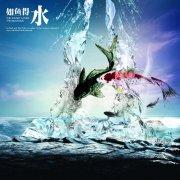 金鱼素材海报
