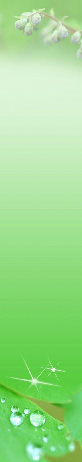 绿色展板设计