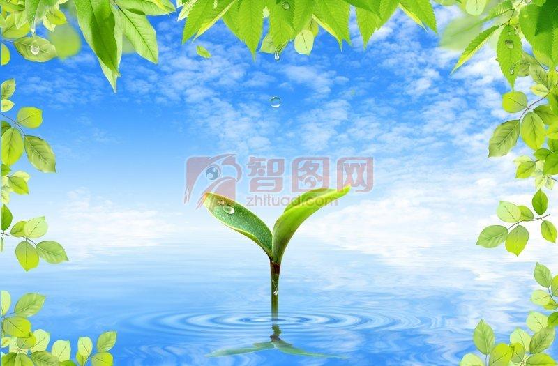 蓝天白云背景素材  关键词: 树叶 树苗 蓝天 蓝天白云素材 花草创意
