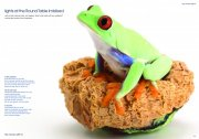 青蛙主题画册
