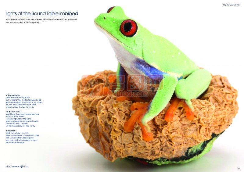 青蛙主題畫冊