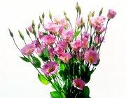 粉紅色鮮花