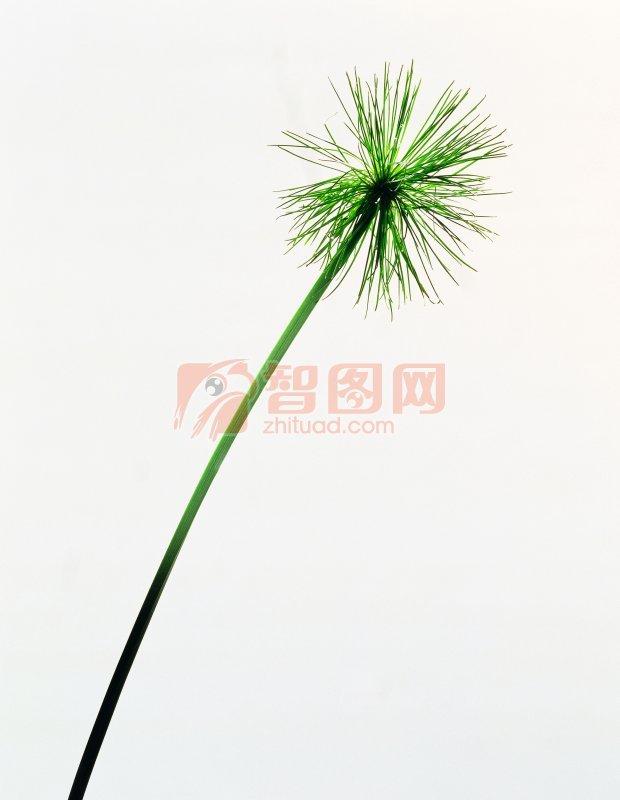 花卉枝節元素