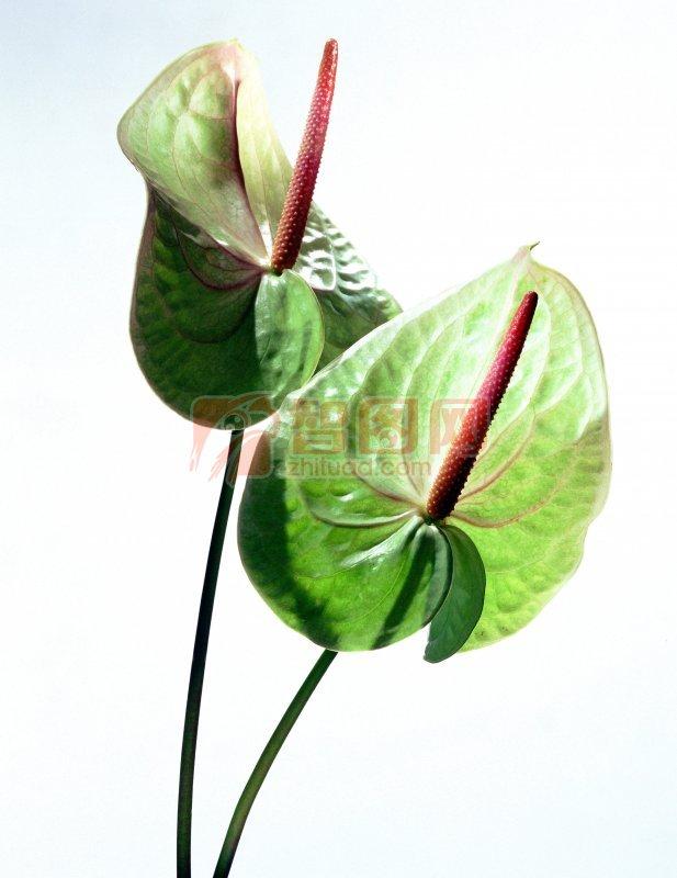 綠色鮮花元素