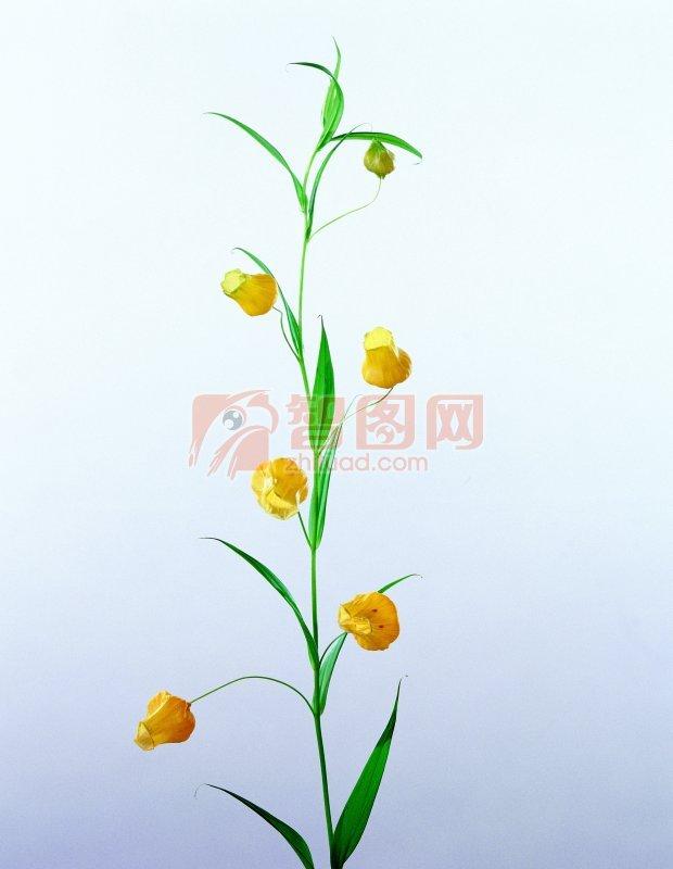 黃色鮮花素材
