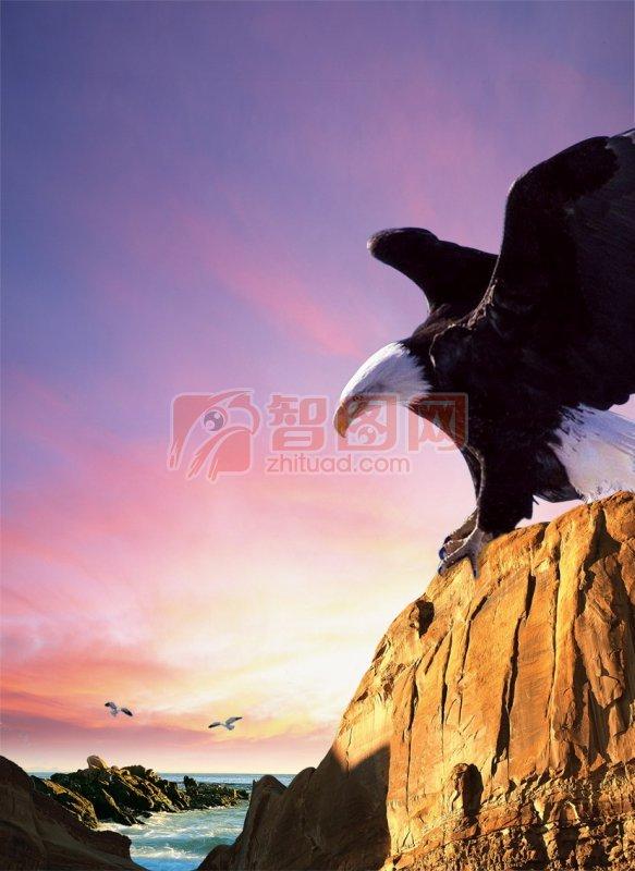 海报设计 创意模板 PSD分层模板 雄鹰展翅素材 大鹏翱翔素材