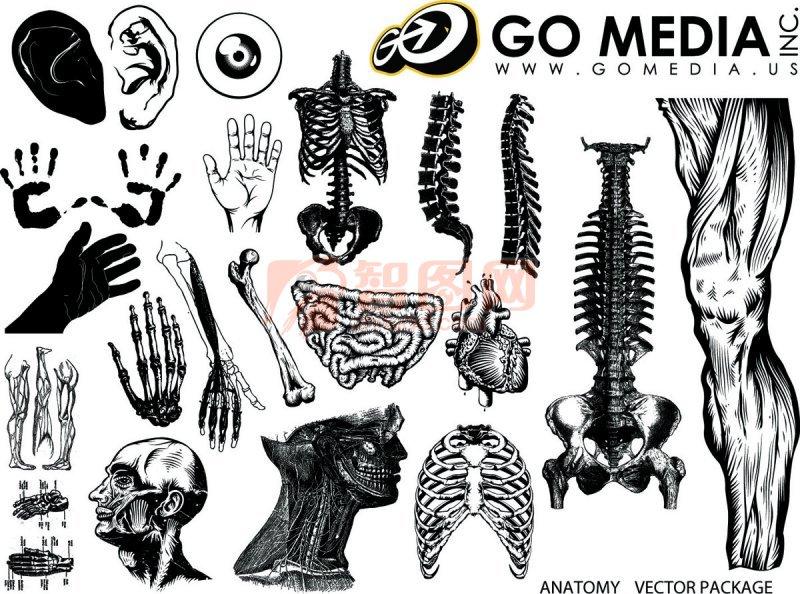 人体绘画素材