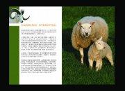 育达牧业画册宣传