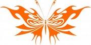 橘黄色蝴蝶设计元素