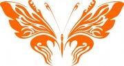 橘黄色蝴蝶