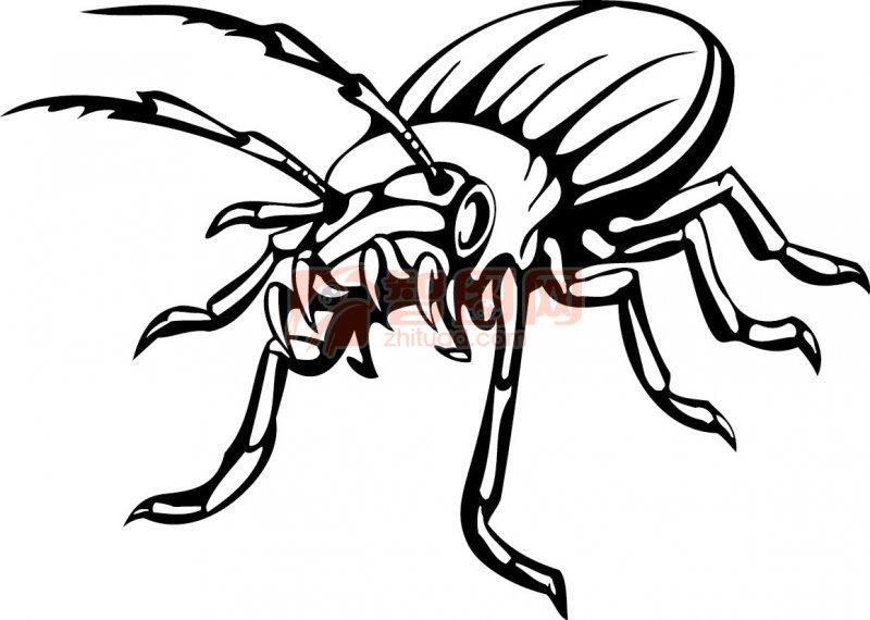 对称的昆虫手绘