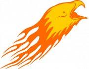 鹰头花纹设计