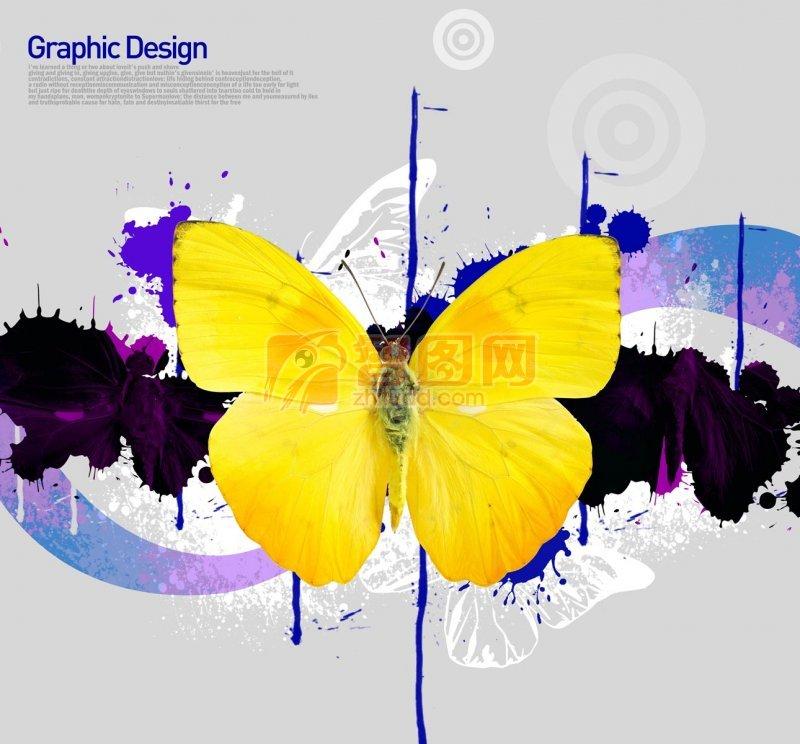 黃色蝴蝶花紋