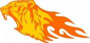 黄色老虎花纹