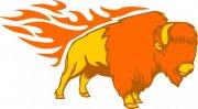 橘黄色雄狮花纹
