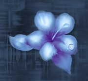 带水滴的花