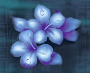 带水珠的花