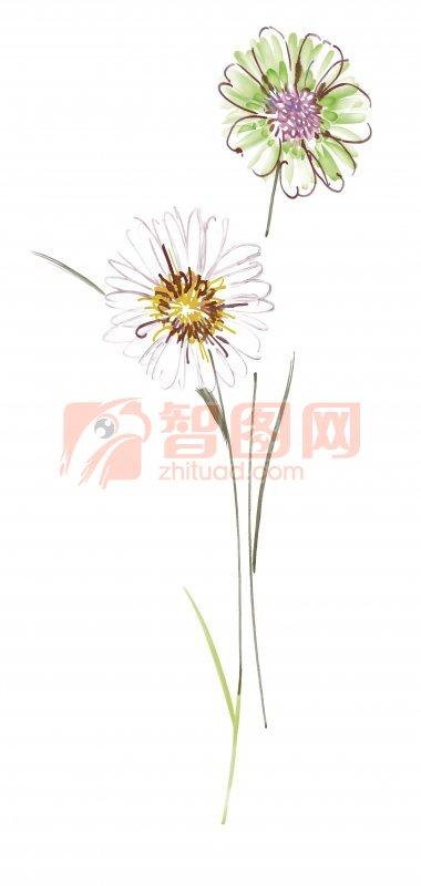 風中的白花