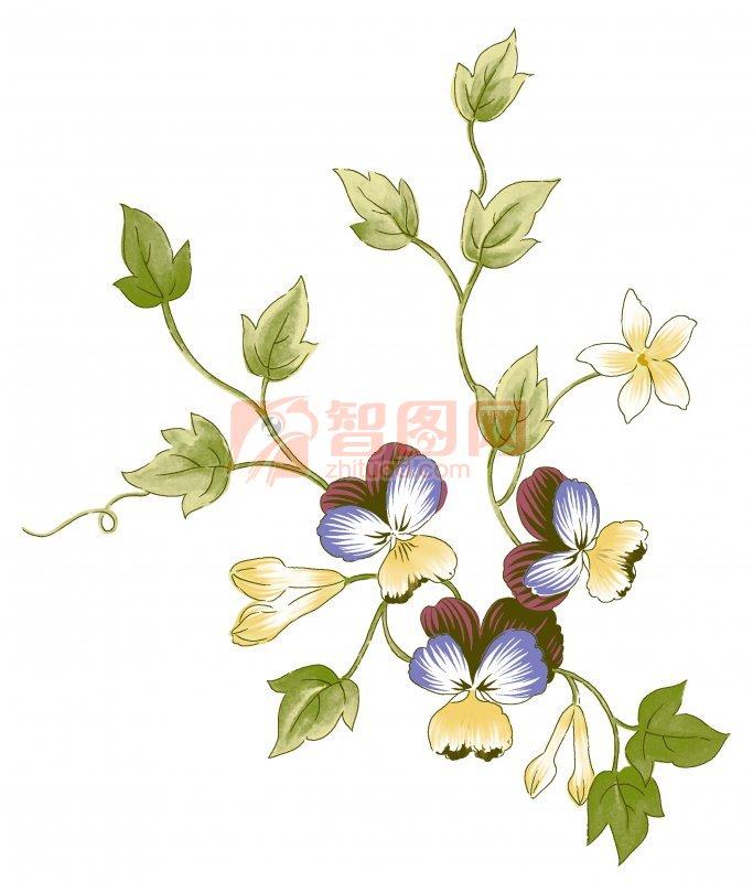 蝴蝶兰花朵