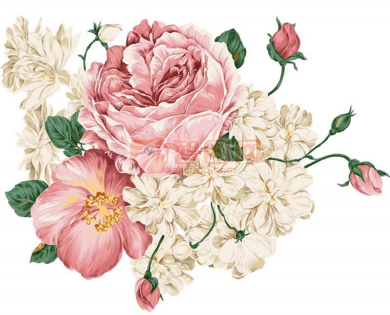 牡丹花边框素材图片
