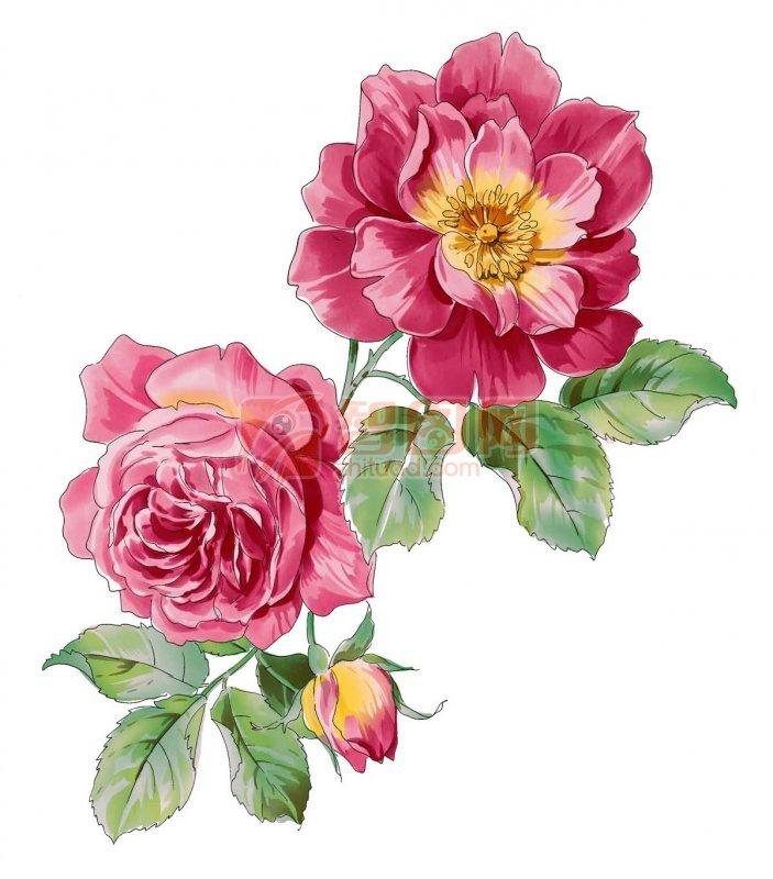 盛开的花朵