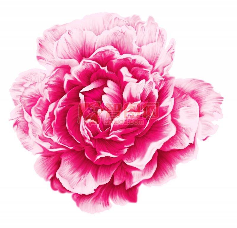 【psd】牡丹花