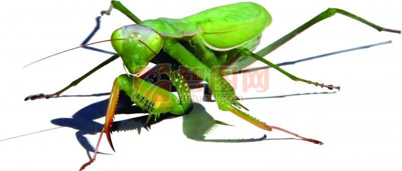 昆虫类海报