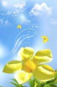 放大的黄花