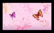 花纹背景 蝴蝶花纹