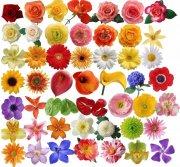 花卉大全 高清花卉 玫瑰花 菊花 丁香花瓣