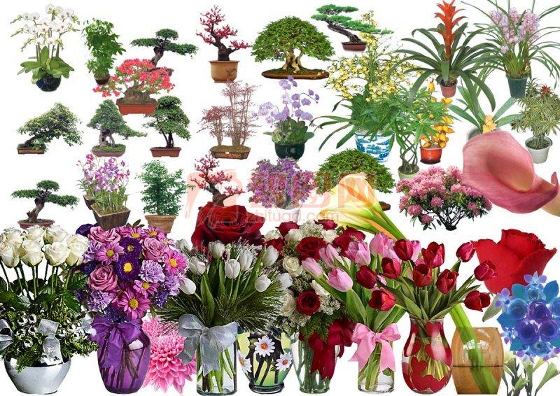 高清花卉盆景组合