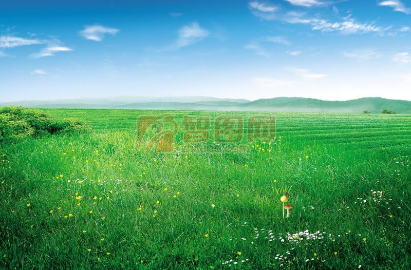 綠色草原風光海報