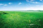 绿色草原风光海报