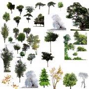 扣好的各种树