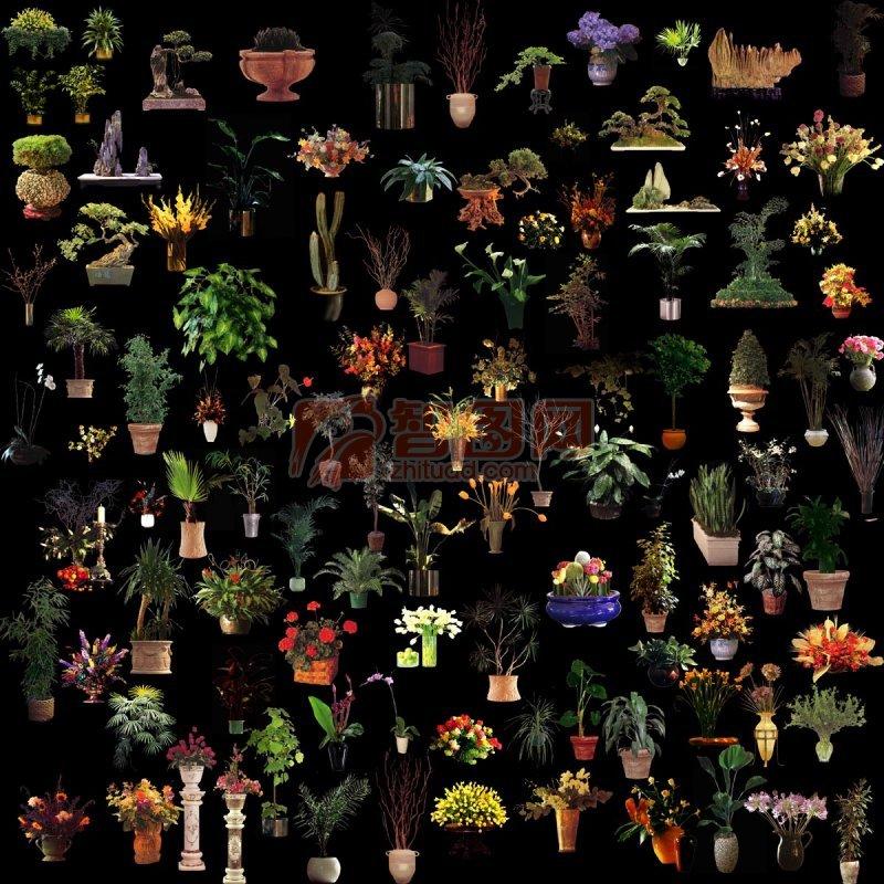 各色盆景花卉