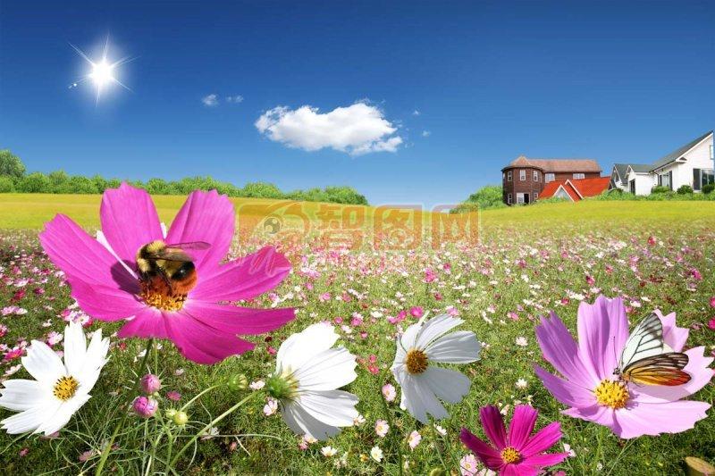 自然野花风景海报