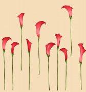 整齐排列的红花