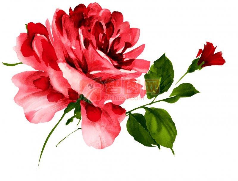 綻放的花朵