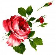 盛开的红花