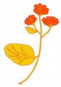 橘黄色花纹