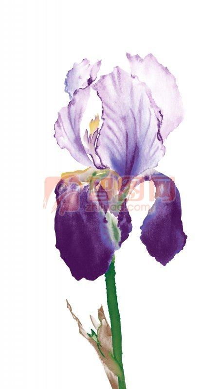 花卉花纹设计